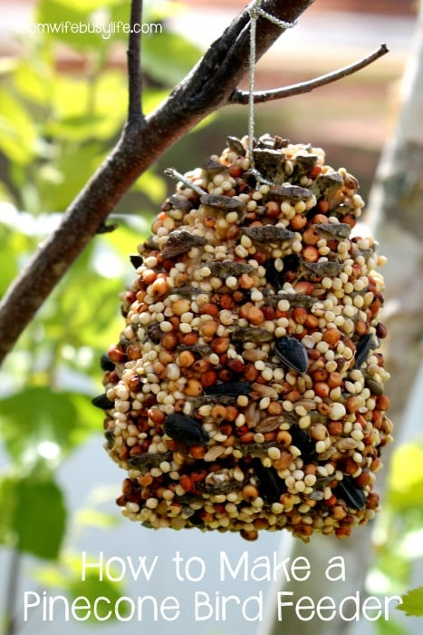 How to Make a Pinecone Bird Feeder