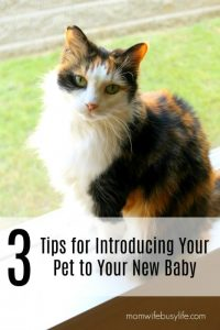introducing your pet and new baby