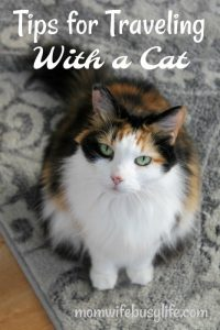 tips for traveling with a cat