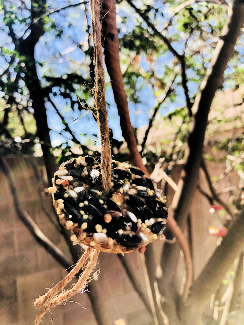 Gelatin Bird Feeder