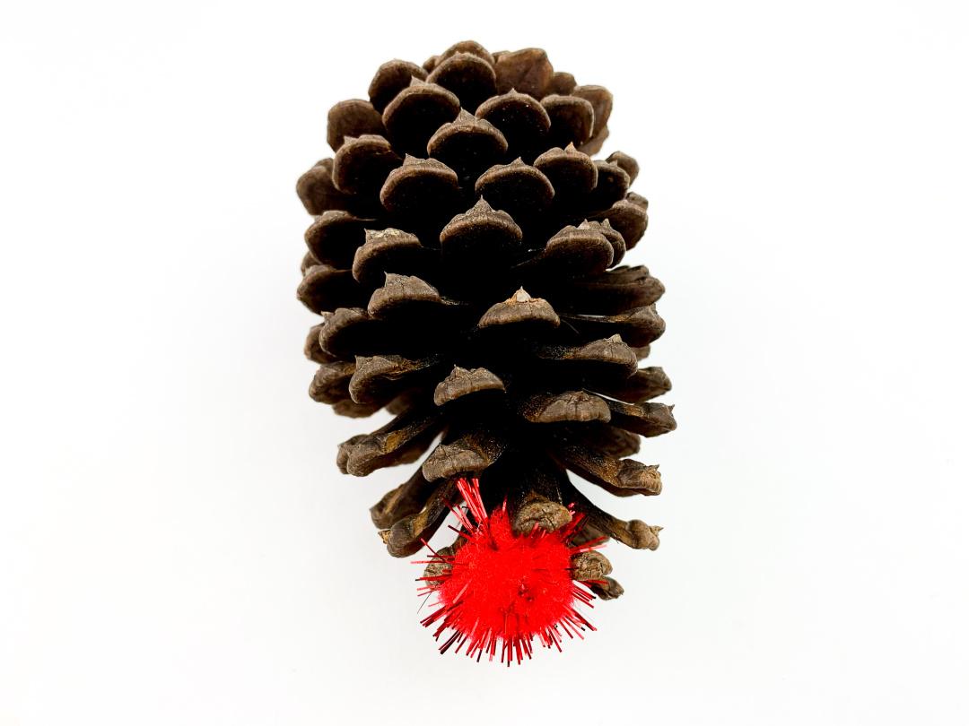 pine cone nose