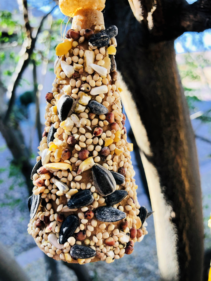 Sugar Cone Bird Feeder